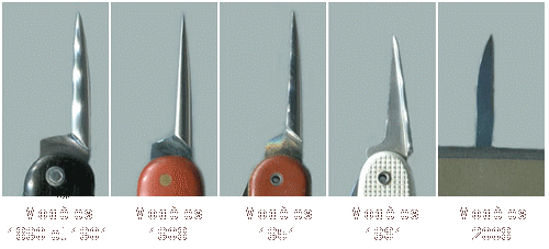 Evolution of the awls
